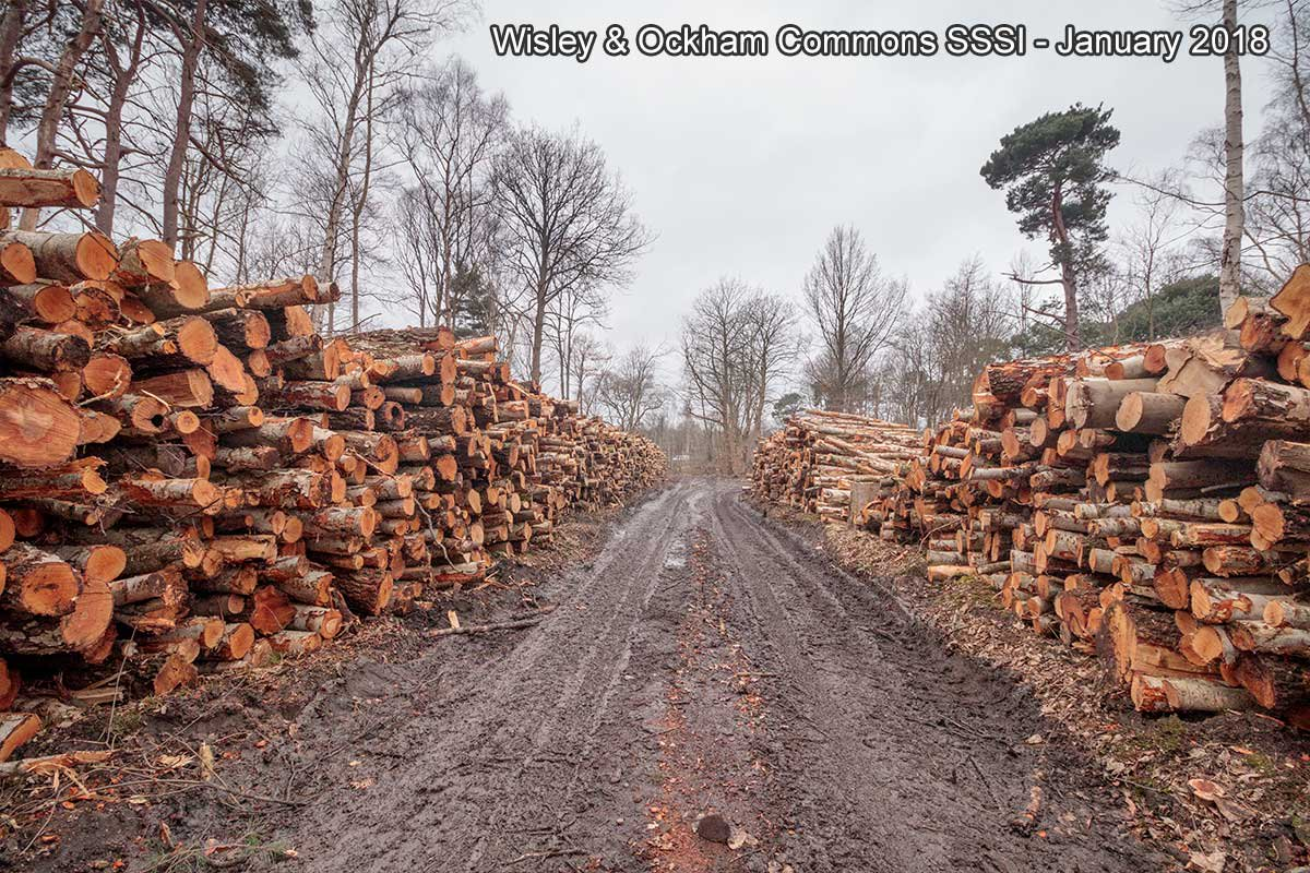 Stacks of felled timber